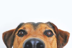 dog accessories for drop shipping